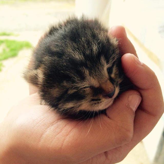 slika maca teen
