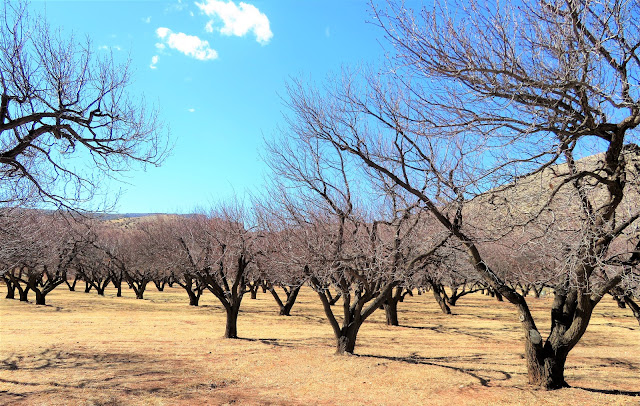 The orchard in winter.