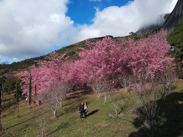Bosque Kaoru Kumazawa, Pedra Azul