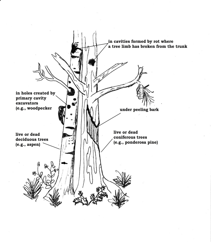 Whispers In The Dark Part 4 Provide Bat Roosting Habitat