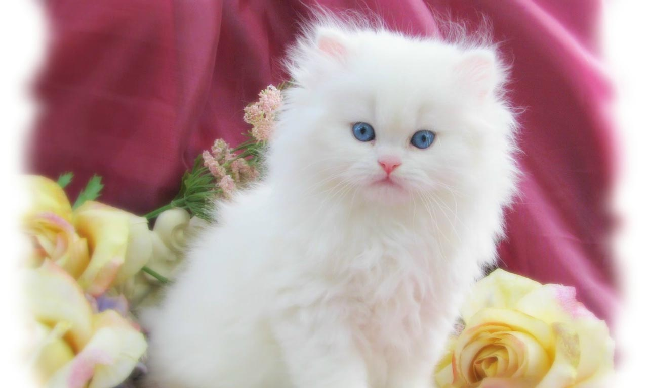 easter backgrounds cat images - photo #9