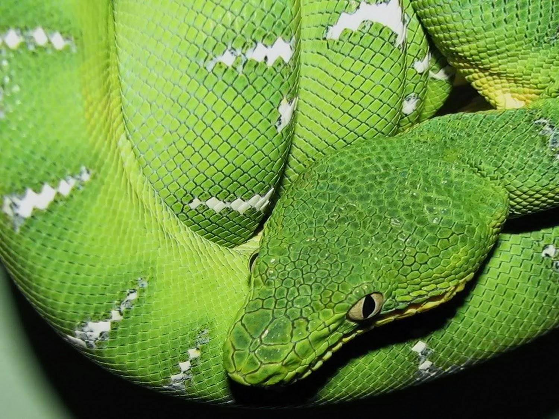 7 Spesies Ular Paling Aneh Dan Sangat Tak Biasa Dari Berbagai