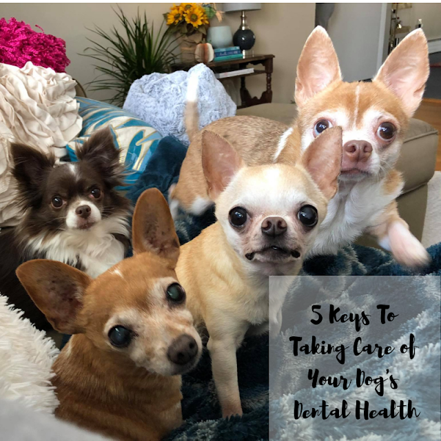 5 Keys to Taking Care of Your Dog's Oral Health