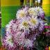 Ashoknagar M. Park Flowers - 1