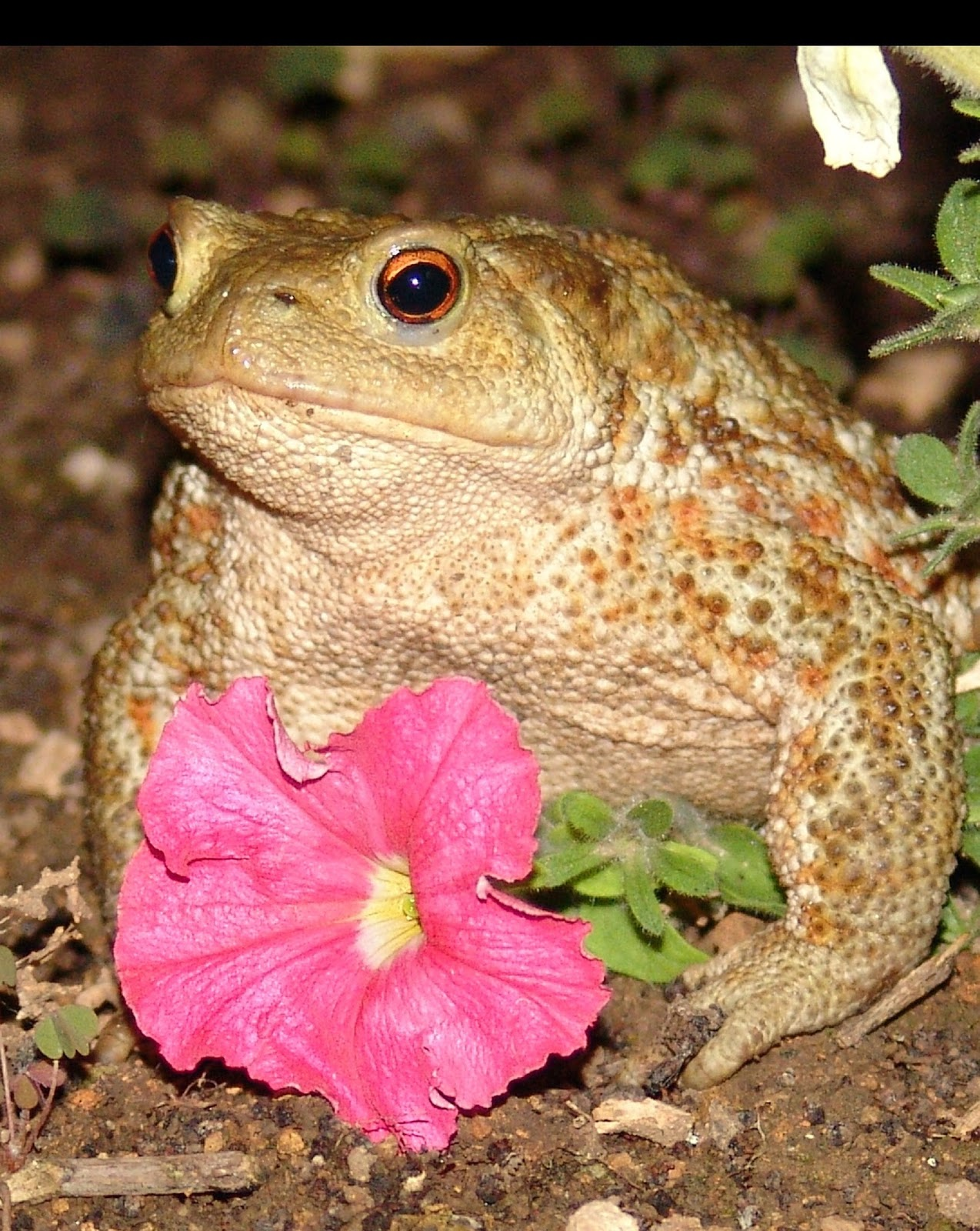 Image of a toad .