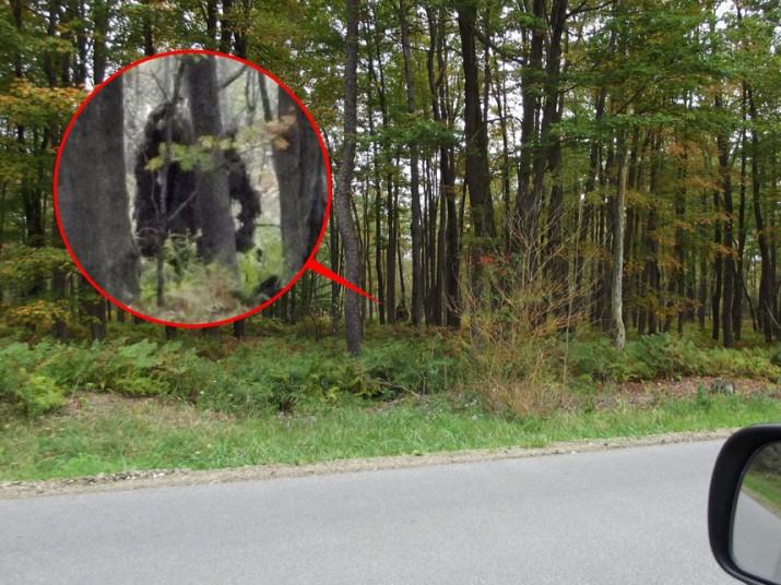 7 Real Bigfoot Sightings The Fortean Slip