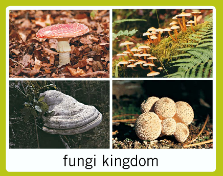 Can Fungi Make There Own Food
