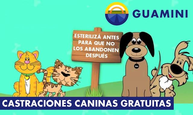 castraciones caninas gratuitas