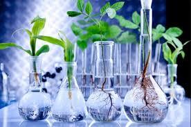 Contoh Perkembangan Bioteknologi di Bidang Pertanian, Peternakan, dan Pemberantasan Hama