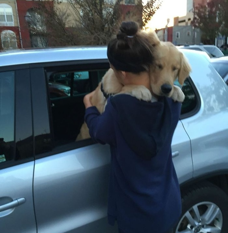 25 Heartwarming Pictures Of Dogs That Teach Us What Unconditional Love Truly Means