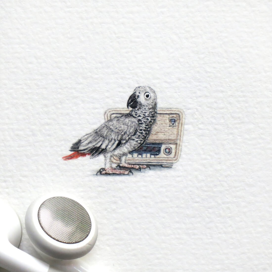 10-Grey-Parrot-Frank Holzenburg Miniature Drawings and Paintings of Animals-www-designstack-co