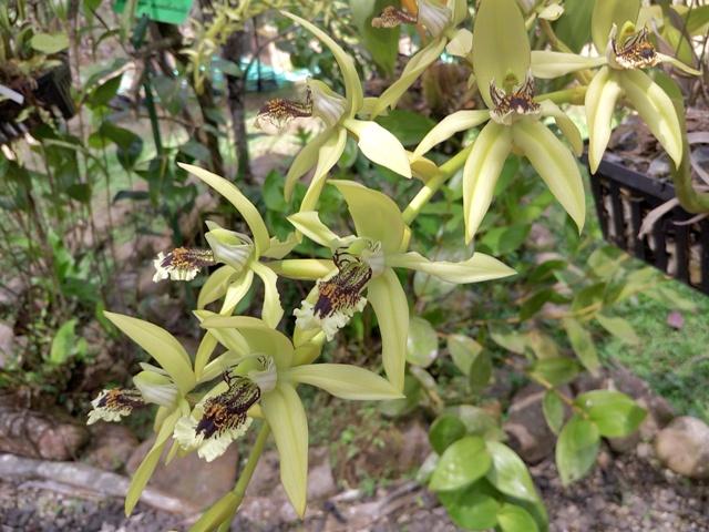 Orquídeas imitando insectos