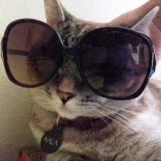 Gambar Kucing Lucu dan Keren Pakai Kacamata Hitam