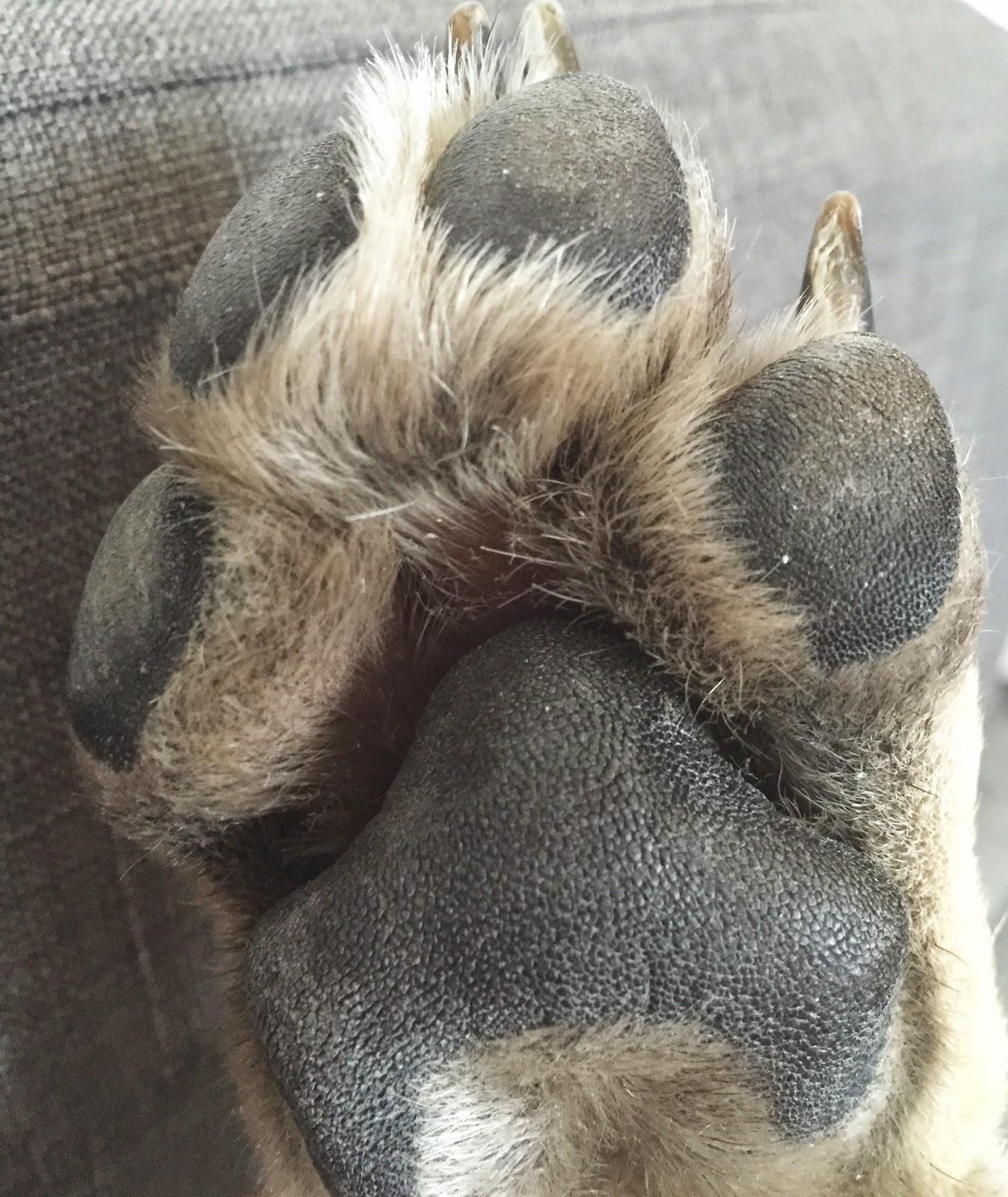Coronavirus, des chaussures aux pattes de chien: les nouveaux canulars