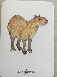 carte animaux Capybara Mon coffret Montessori des animaux édition Nathan