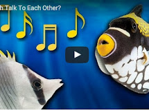 Fish Talk To Each Other? How do fish talk?