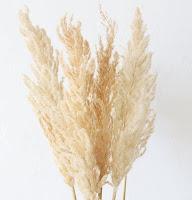 A Floral Dried Pampass Grass