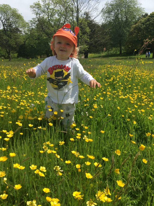 toddler-running-to-camera-in-buttercup-field-Dyffryn-Gardens