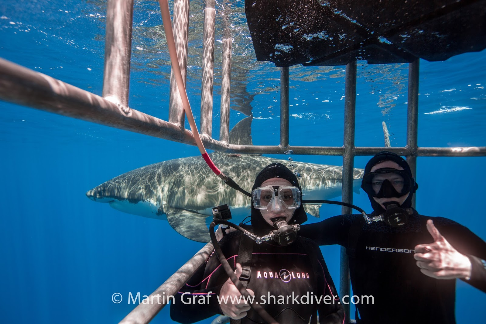 """a look at the many efforts in the conservation of sharks by the unfao """"the link that too many ignore"""", terrastendo, 26 august 2016, https:  sharks, crabs,  although those involved can be proud of their efforts in many respects."""