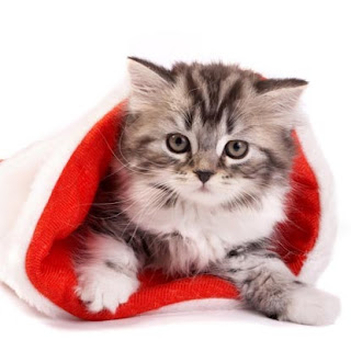 Kitten in Christmas hat