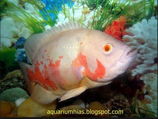 Catfih jenis ikan lele