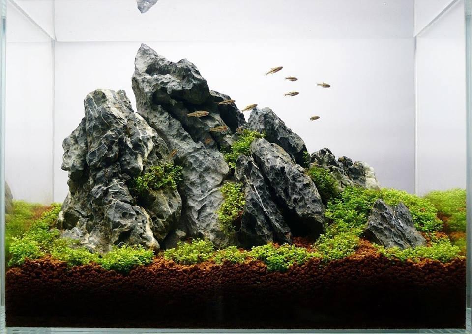 Một hồ thủy sinh dùng đá kẹp kem
