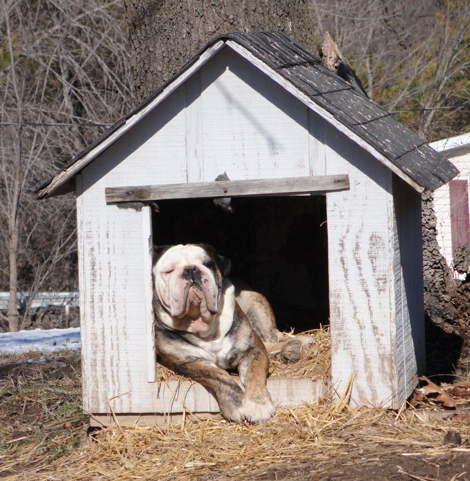 Mustang Dreams      Hemi In The Dog House   Literally   And More