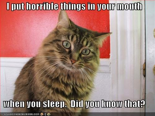 Crazy Cat Pictures With Quotes | Crazy Cats