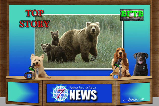 BFTB NETWoof News with Top Story about Bears on back screen