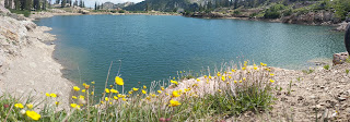 Beautiful Yellow flowers with Cecret Lake Alta Utah in the Background