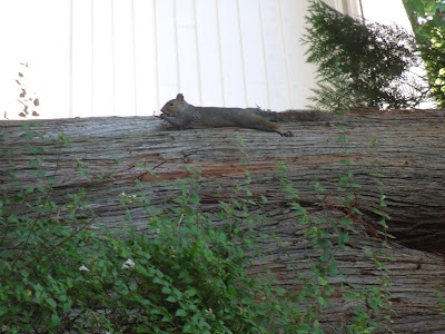 a squirrel relaxing on a tree trunk