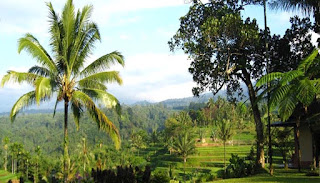 Kalibaru Plantation in Banyuwangi, East Java