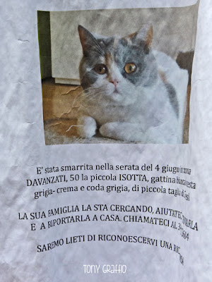 Cartello di gatto smarrito in zona Dergano