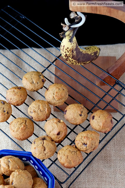 http://www.farmfreshfeasts.com/2015/08/banana-and-peanut-butter-chocolate-chip.html