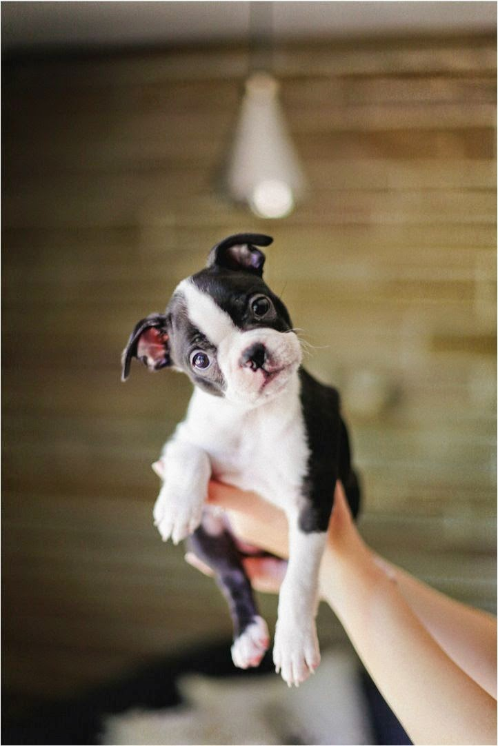 Adorable too cute puppy