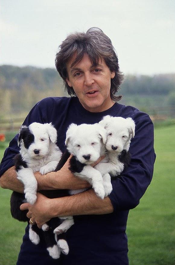 Paul McCartney s'engage pour libérer des lévriers au Texas