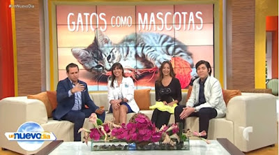 Christine Michaels live nationwide television in Spanish
