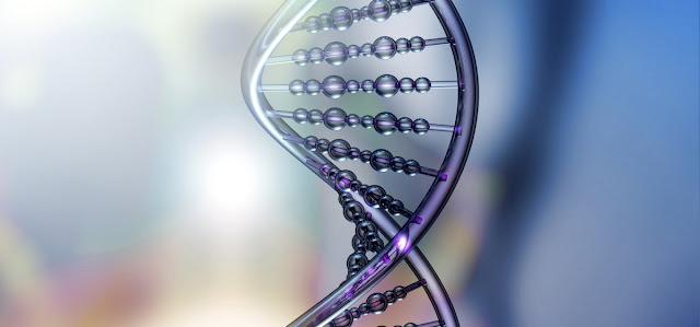 ADN y genes