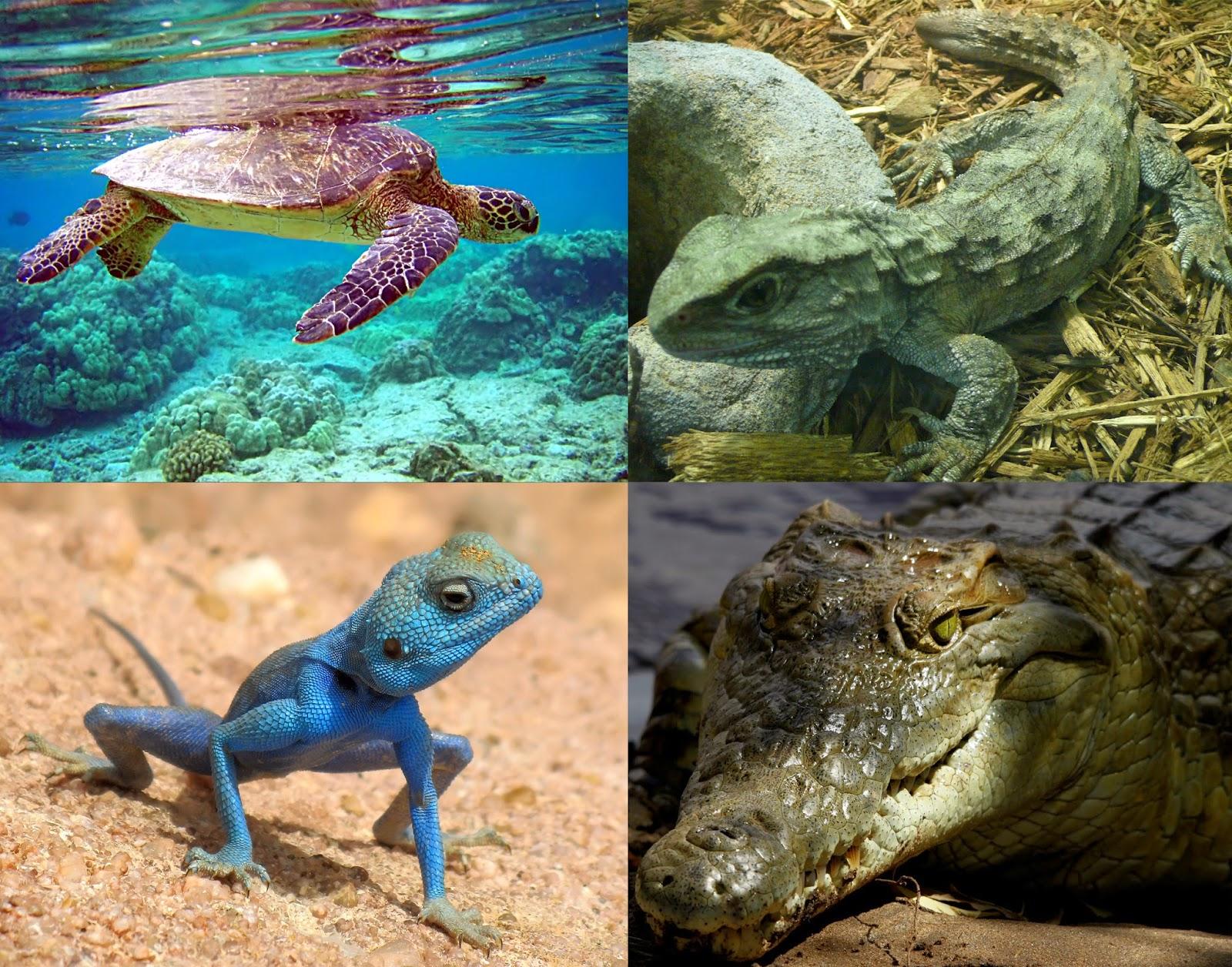 Métodos y técnicas de estudio de animales : Reptiles