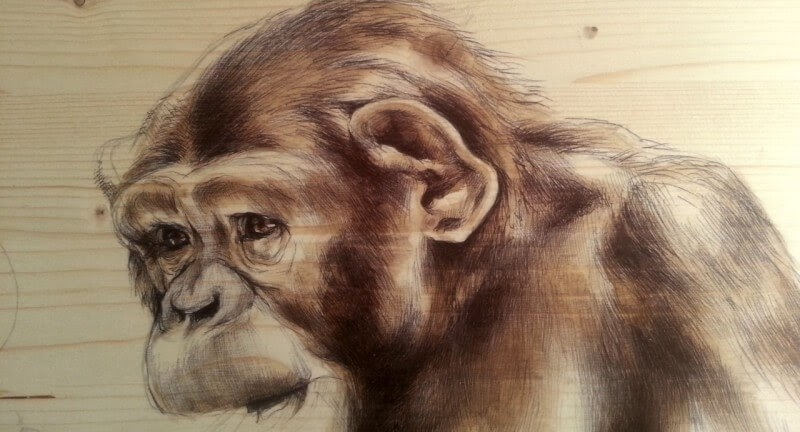 13-The-Chimpanzee-Martina-Billi-Animal-Drawings-on-Recycled-Wooden-Planks-www-designstack-co