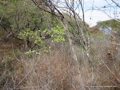 Cerro Viejo - Bosque subcaducifolio