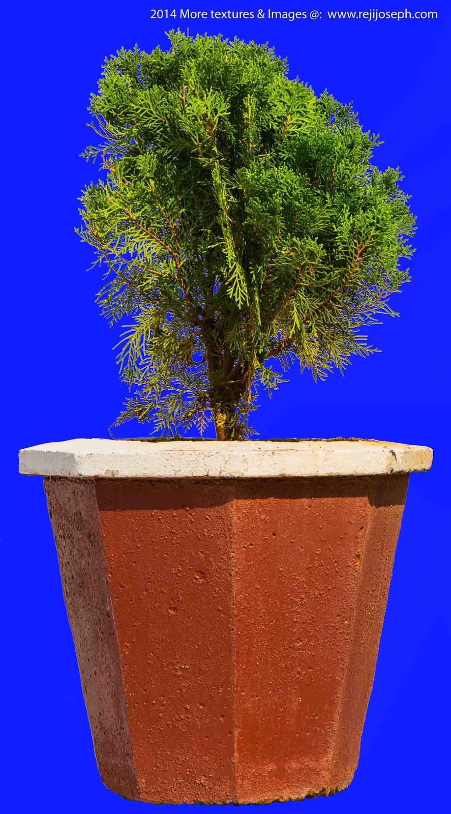 Cypress Garden Plant Texture 00001