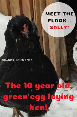 10 year old hen.