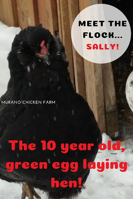 10 year old hen.