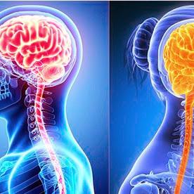 دماغ الرجل ودماغ المرأة إختلاف لأجل التكامل