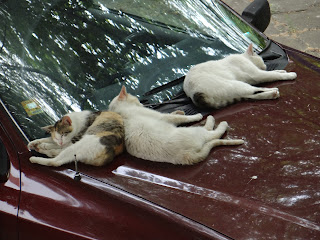 Cats, Sleeping, Car Bonnet, Yambol,