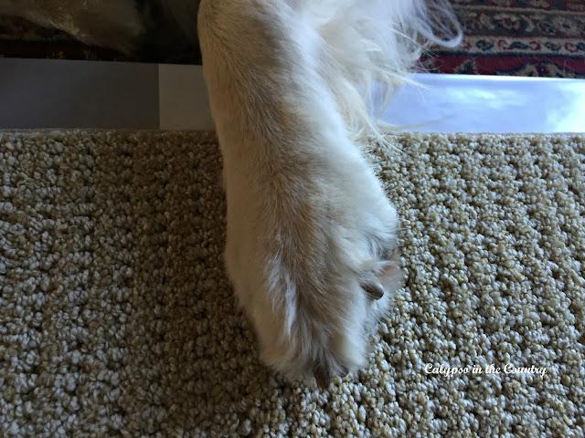 Choosing a Dog Friendly Carpet