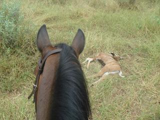 leijona, hevonen, ratsastus, safari, ratsastusmatka, riitta reissaa, gudu, saalis