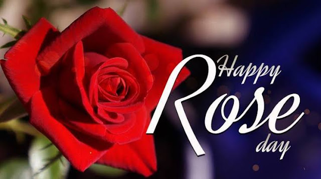 Rose day Wallpapers