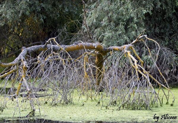 vegetatie-delta-dunarii